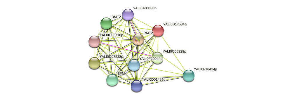 XP_501021.1 protein (Yarrowia lipolytica) - STRING interaction network