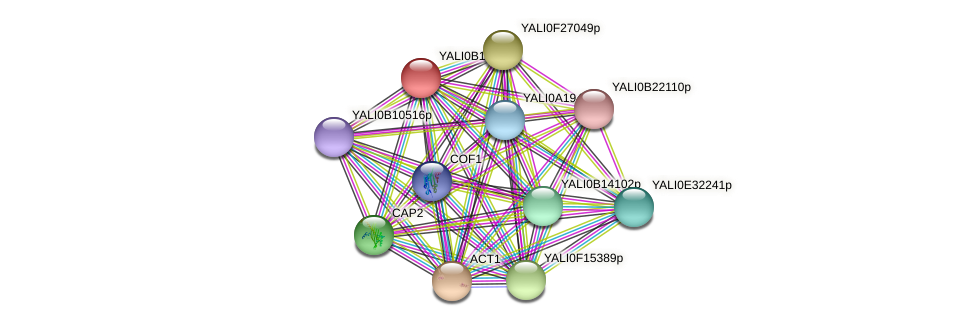 XP_501023.2 protein (Yarrowia lipolytica) - STRING interaction network