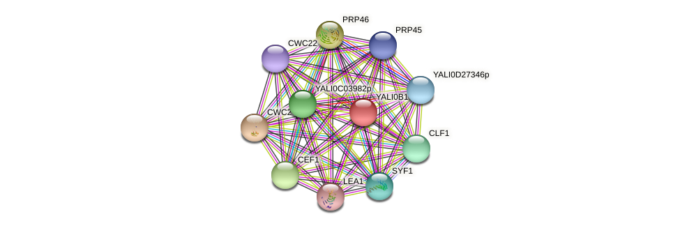 XP_501035.1 protein (Yarrowia lipolytica) - STRING interaction network