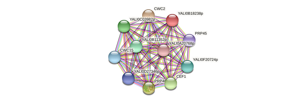 XP_501048.1 protein (Yarrowia lipolytica) - STRING interaction network