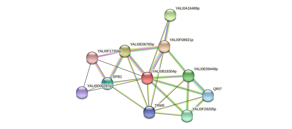 XP_501051.2 protein (Yarrowia lipolytica) - STRING interaction network