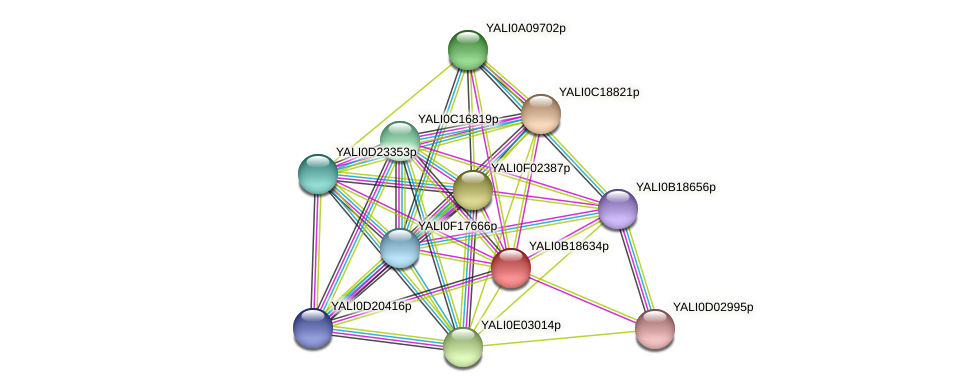 XP_501066.1 protein (Yarrowia lipolytica) - STRING interaction network