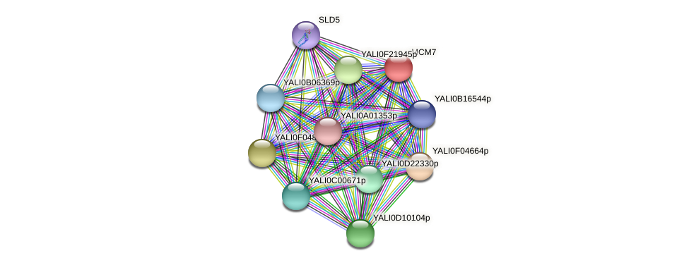 XP_501070.1 protein (Yarrowia lipolytica) - STRING interaction network
