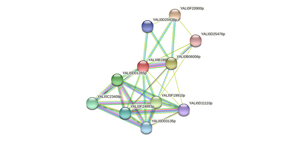 XP_501077.1 protein (Yarrowia lipolytica) - STRING interaction network