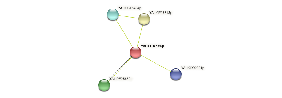 XP_501081.1 protein (Yarrowia lipolytica) - STRING interaction network