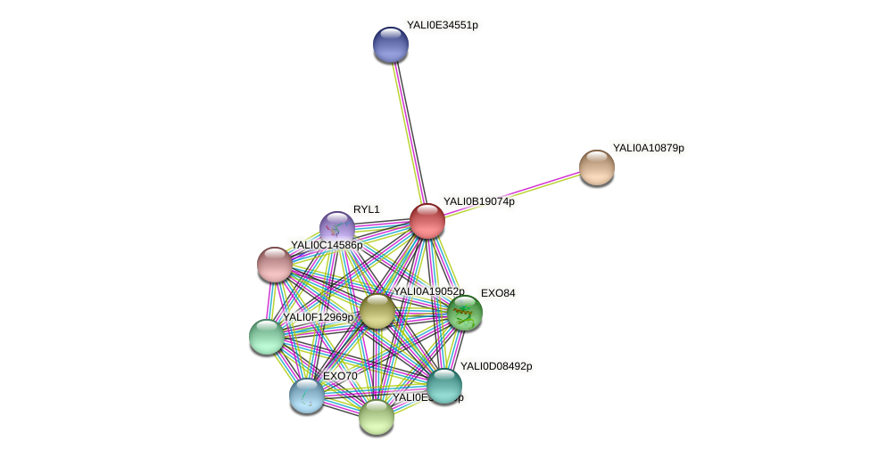 XP_501085.1 protein (Yarrowia lipolytica) - STRING interaction network