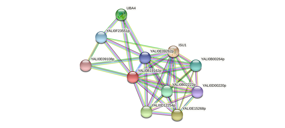 XP_501088.1 protein (Yarrowia lipolytica) - STRING interaction network