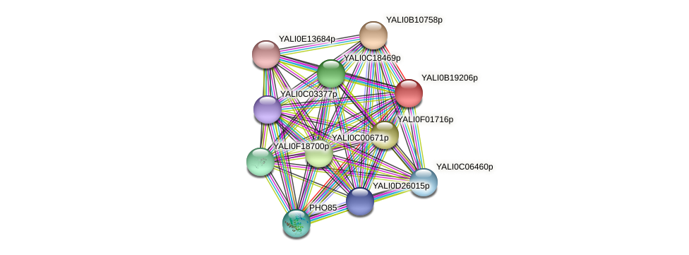 XP_501090.1 protein (Yarrowia lipolytica) - STRING interaction network