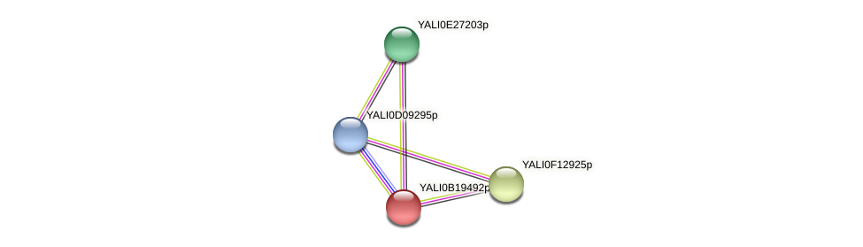 XP_501099.1 protein (Yarrowia lipolytica) - STRING interaction network