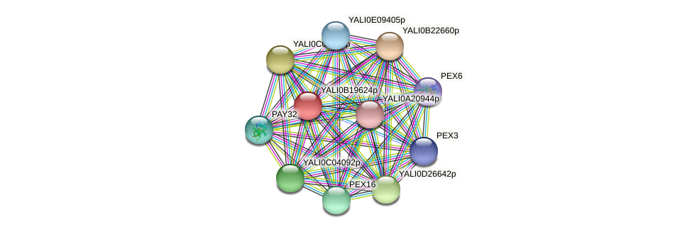 XP_501103.1 protein (Yarrowia lipolytica) - STRING interaction network