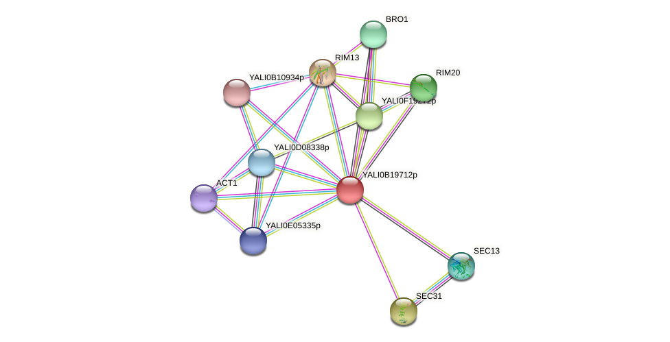 XP_501107.1 protein (Yarrowia lipolytica) - STRING interaction network