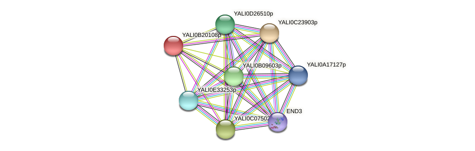 XP_501123.1 protein (Yarrowia lipolytica) - STRING interaction network