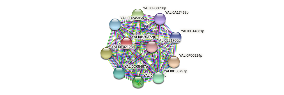 XP_501133.1 protein (Yarrowia lipolytica) - STRING interaction network