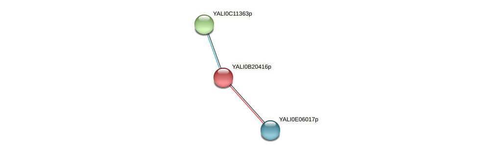 XP_501135.1 protein (Yarrowia lipolytica) - STRING interaction network