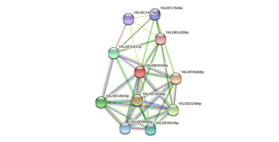 XP_501136.1 protein (Yarrowia lipolytica) - STRING interaction network