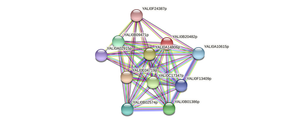 XP_501138.1 protein (Yarrowia lipolytica) - STRING interaction network