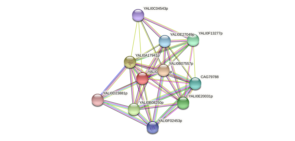 XP_501146.1 protein (Yarrowia lipolytica) - STRING interaction network