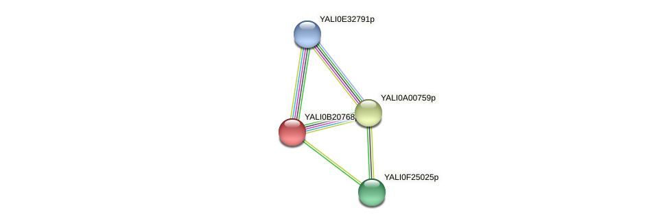 XP_501151.1 protein (Yarrowia lipolytica) - STRING interaction network