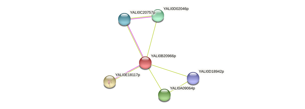 XP_501160.1 protein (Yarrowia lipolytica) - STRING interaction network