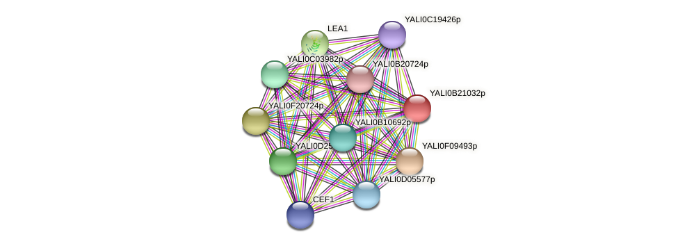 XP_501163.1 protein (Yarrowia lipolytica) - STRING interaction network