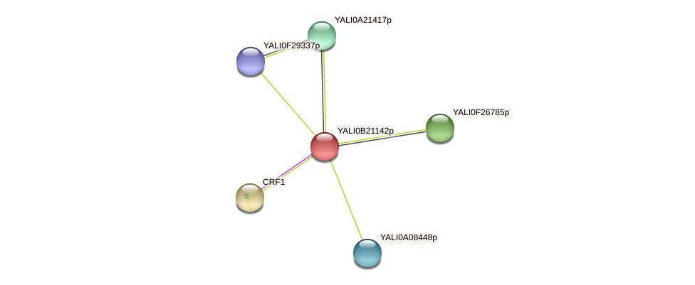 XP_501168.1 protein (Yarrowia lipolytica) - STRING interaction network