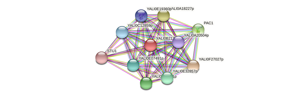 XP_501179.1 protein (Yarrowia lipolytica) - STRING interaction network