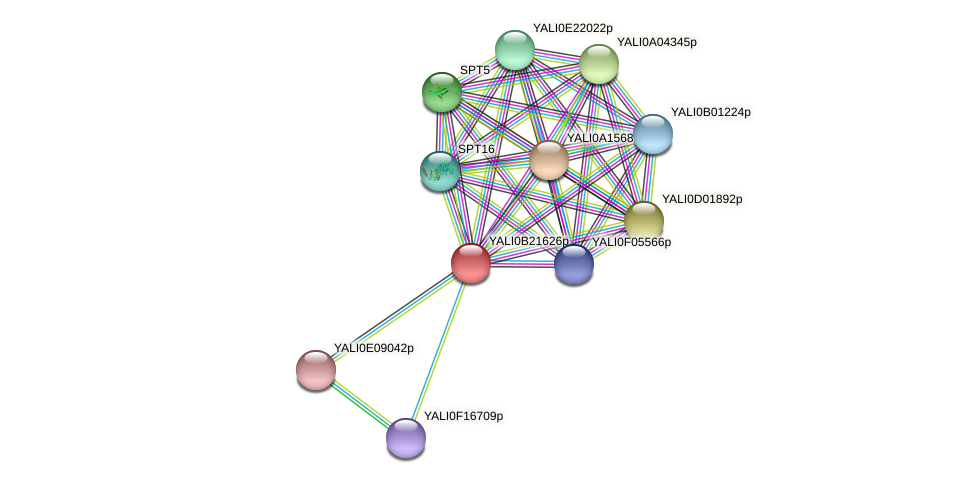 XP_501190.1 protein (Yarrowia lipolytica) - STRING interaction network