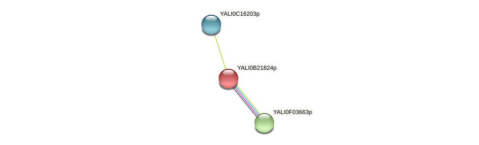 XP_501196.1 protein (Yarrowia lipolytica) - STRING interaction network