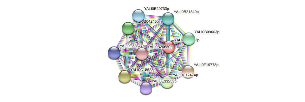 XP_501200.1 protein (Yarrowia lipolytica) - STRING interaction network