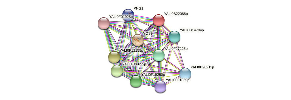 XP_501206.2 protein (Yarrowia lipolytica) - STRING interaction network