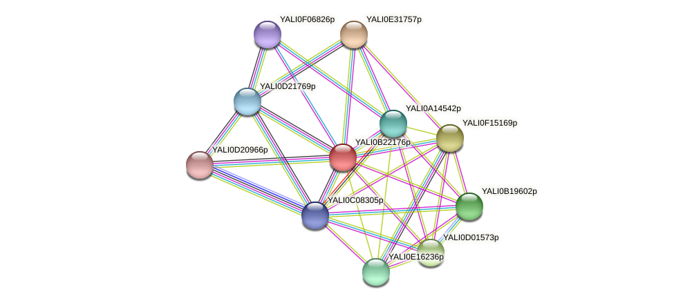 XP_501210.1 protein (Yarrowia lipolytica) - STRING interaction network