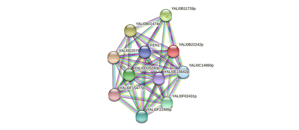 XP_501213.1 protein (Yarrowia lipolytica) - STRING interaction network