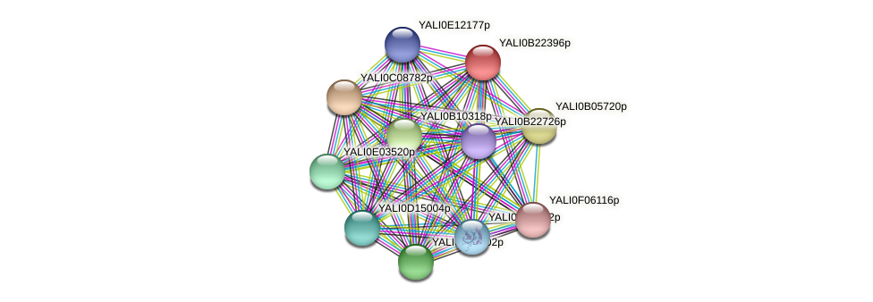 XP_501219.1 protein (Yarrowia lipolytica) - STRING interaction network