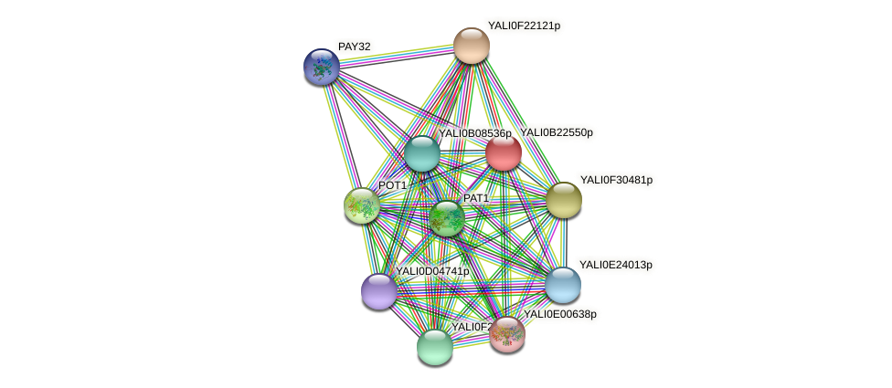 XP_501226.1 protein (Yarrowia lipolytica) - STRING interaction network