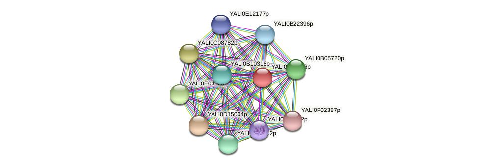 XP_501234.1 protein (Yarrowia lipolytica) - STRING interaction network