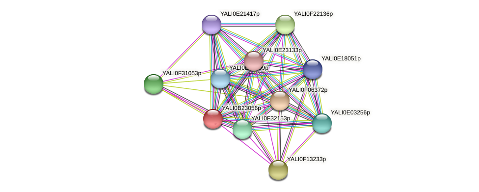 XP_501249.1 protein (Yarrowia lipolytica) - STRING interaction network