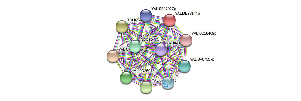 XP_501253.1 protein (Yarrowia lipolytica) - STRING interaction network