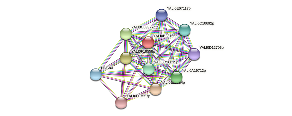 XP_501254.1 protein (Yarrowia lipolytica) - STRING interaction network