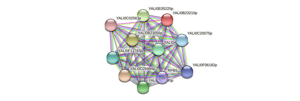 XP_501256.1 protein (Yarrowia lipolytica) - STRING interaction network
