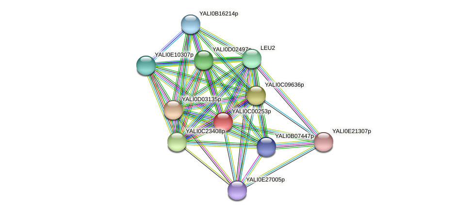 XP_501277.1 protein (Yarrowia lipolytica) - STRING interaction network