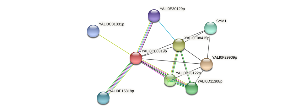 XP_501280.1 protein (Yarrowia lipolytica) - STRING interaction network