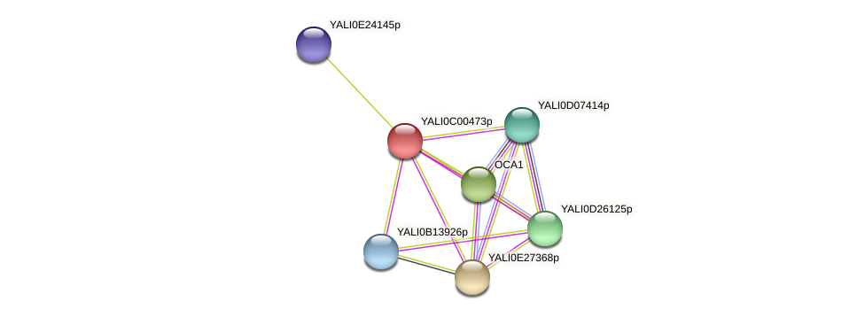 XP_501287.1 protein (Yarrowia lipolytica) - STRING interaction network