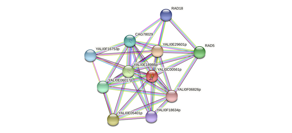 XP_501290.1 protein (Yarrowia lipolytica) - STRING interaction network
