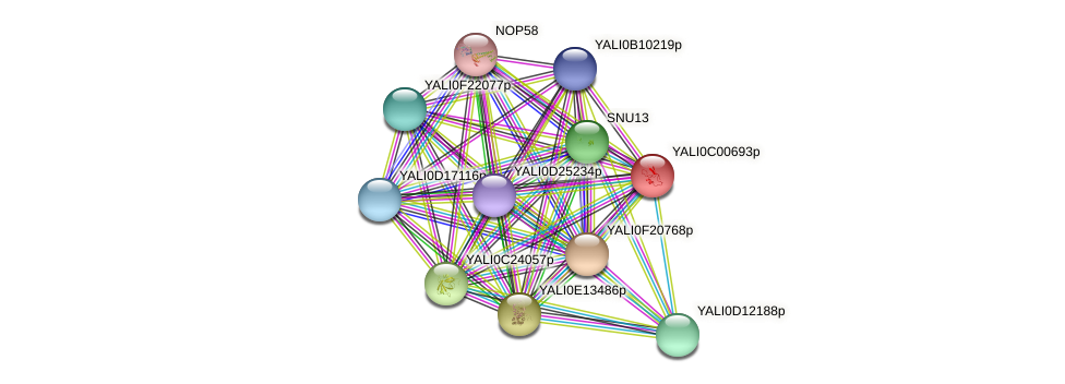 XP_501296.1 protein (Yarrowia lipolytica) - STRING interaction network