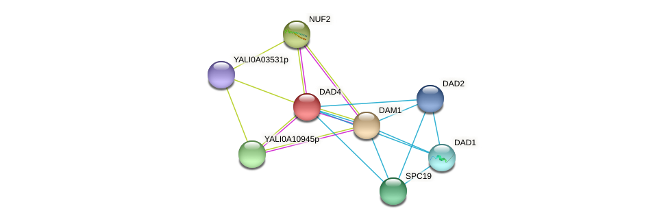 DAD4 protein (Yarrowia lipolytica) - STRING interaction network