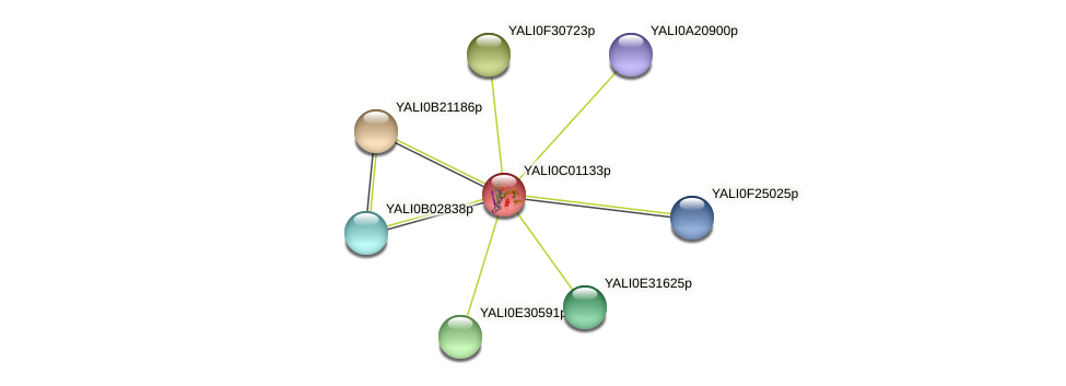 XP_501316.1 protein (Yarrowia lipolytica) - STRING interaction network