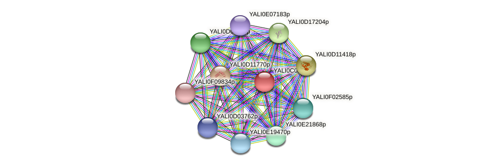 XP_501320.1 protein (Yarrowia lipolytica) - STRING interaction network