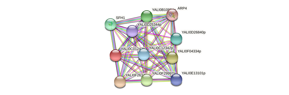 XP_501321.2 protein (Yarrowia lipolytica) - STRING interaction network