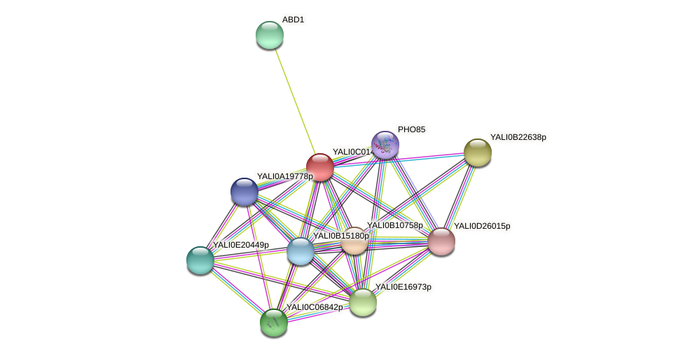 XP_501331.1 protein (Yarrowia lipolytica) - STRING interaction network