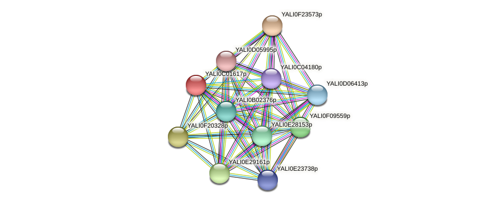 XP_501335.1 protein (Yarrowia lipolytica) - STRING interaction network